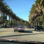 palm-trees-and-la